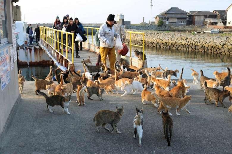 cat island japan